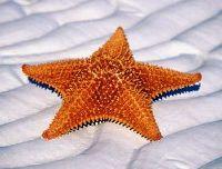Kamasutra n°27, dite l'étoile des mers : la femme ne bouge et se tait, si possible
